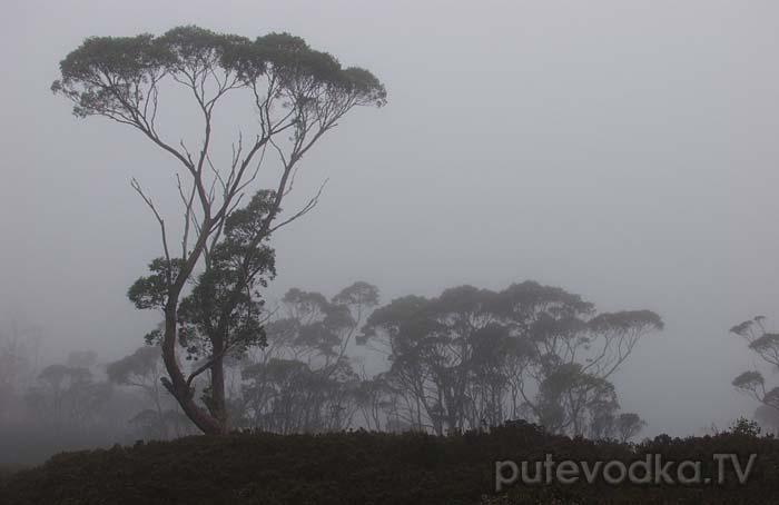 Туманное утро на Оверленд Треке