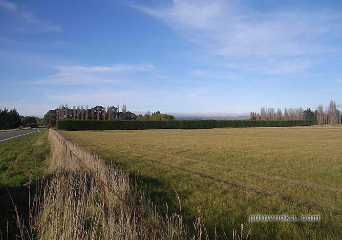 Новозеландская придорожная изгородь