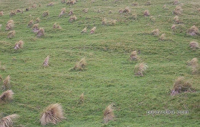 Новозеландский луг