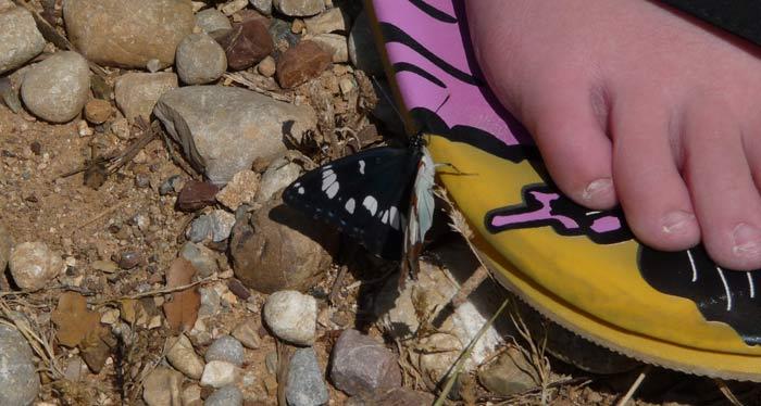 Греция. Илиа. Катаколо. Бабочка на тапочке.