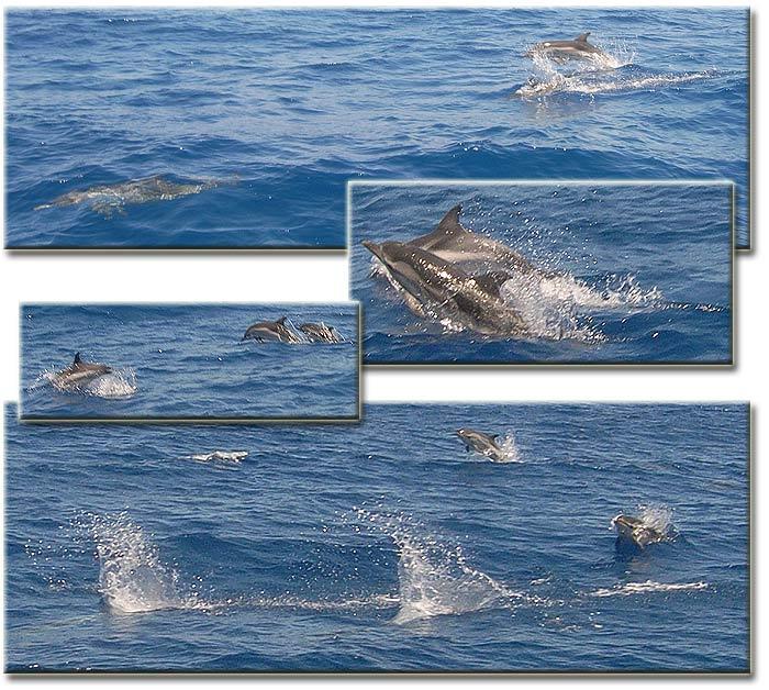 Яхта ПЕПЕЛАЦ. Ионическое море. Дельфины.