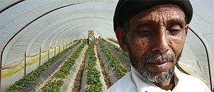 Почти вся сельхозпродукция Греции выращивается иммигрантами