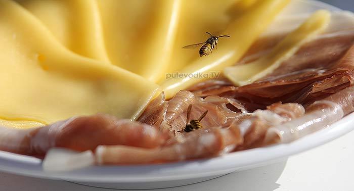 19.07.2012. Осы любят колбасыр. Фото Екатерины Кокиной.
