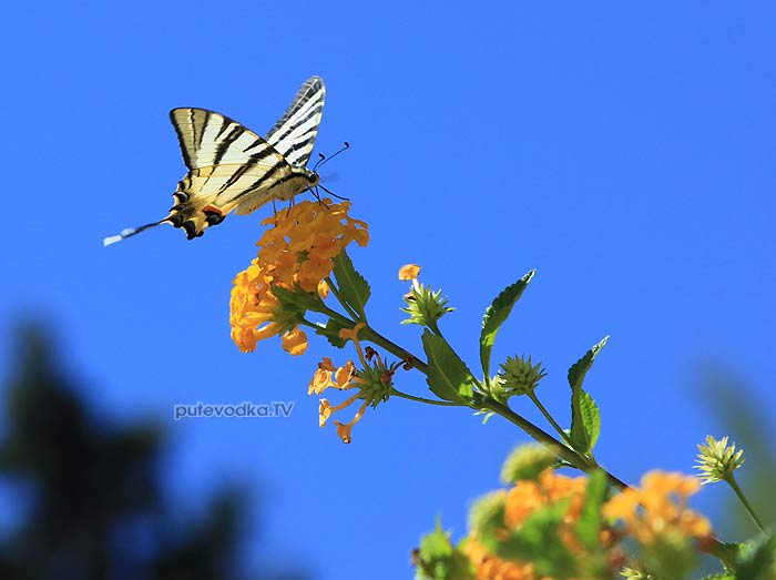26.07.2012. Греция. Ионическое море. Остров Закинтос. Фото— Екатерины Кокиной.