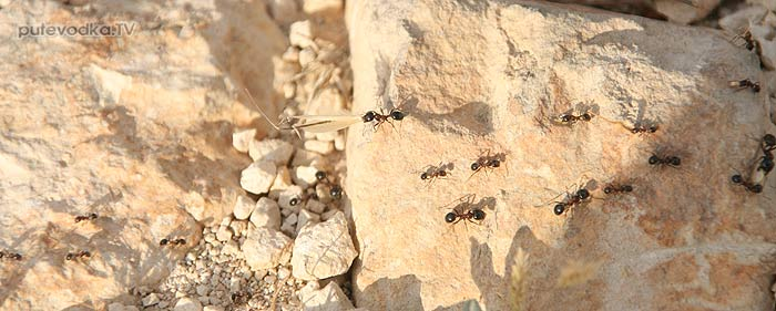 Контрастные мураши