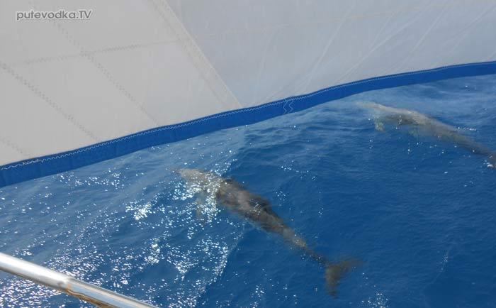 Греция. Восточный Пелопоннес. Идра— Леонидио. Яхта ПЕПЕЛАЦ. Дельфины.