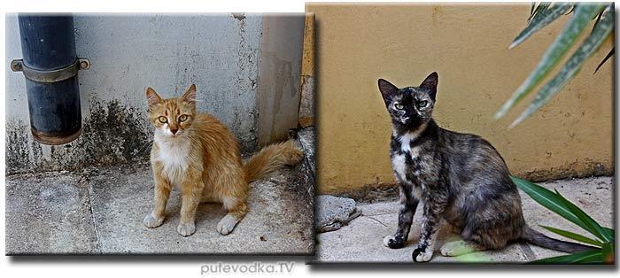 Греция. Пелопоннес. Каламата. Кошки.