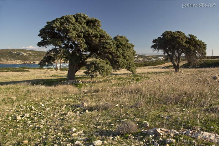 Необработанная земля у дома на мысу «Гарпун»