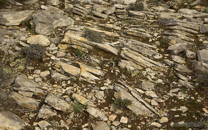 Южная оконечность Пароса. Растения на камнях.