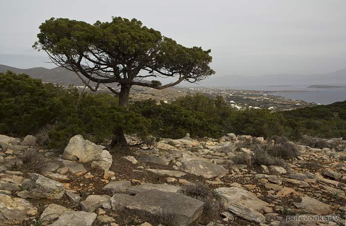 Южная оконечность Пароса. Вид на восток.