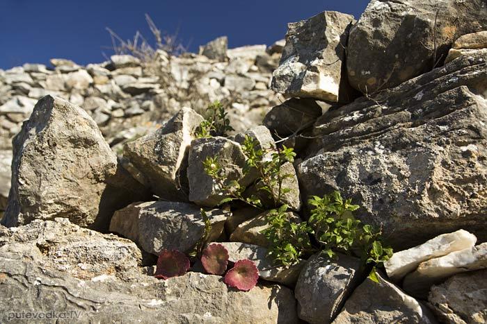 Стена ограды тропы с дикорастущими травами