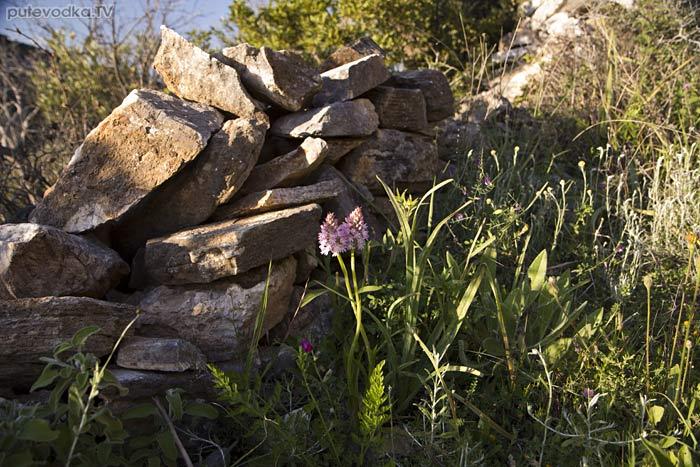 Остров Парос. Византийская тропа. Орхидеи.
