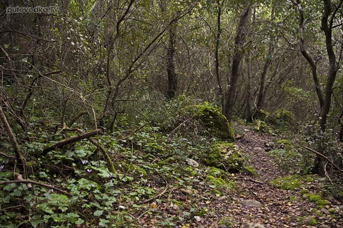 Пелопоннес. Тропа к ущелью Фарангаки Перистерия.