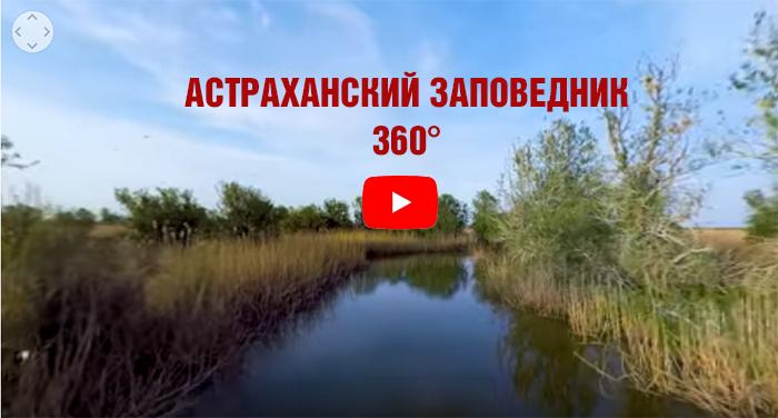 Астраханский заповедник VR360